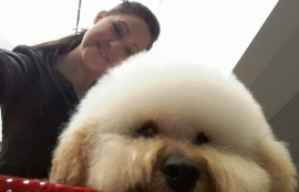 Fays Diamond Dog Grooming