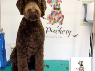 The Poochery Dog Grooming