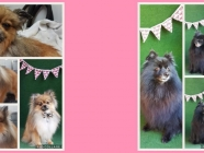 Hair & Hounds Dog Grooming