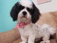 Poppy's Parlour Professional Pet Stylists