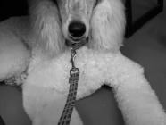 Dog Grooming by Sarah