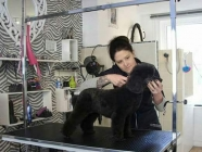 Fays Diamond Dog Grooming