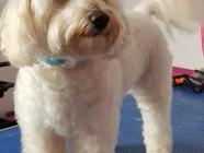 Scruffy 2 Fluffy Dog Grooming School (Wales)