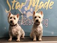 Star Made Dog Groomers