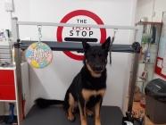 The Dog Stop Ltd