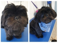 Clipper & Blades Dog Grooming