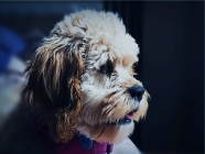 When is the Best Time to Take Your Puppy to the Groomers?