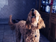 Separation Anxiety and Dog Grooming